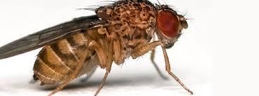 Fruitvliegen en Motten